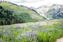 Wildflowers y montañas imagen de archivo libre de regalías