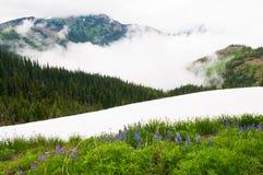 Wildflowers y nieve Fotografía de archivo libre de regalías