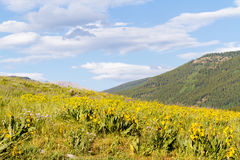 Wildflowers. Yellow and blue wildflowers in full bloom in the mountains Stock Image