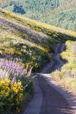 Wildflowers. Yellow and blue wildflowers in full bloom in the mountains Royalty Free Stock Photos