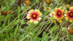Wildflowers. Yellow and orange wildflowers in Saint Augustine Florida stock photo