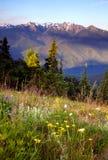 Wildflowers Zakrywają zbocze Olimpijskich gór Huragan grań Zdjęcie Stock