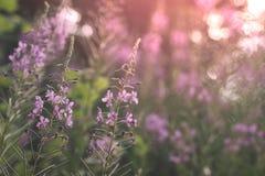 Wildflowersachtergrond in de lente stock fotografie