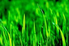 Wildflowersfeld Lizenzfreies Stockfoto