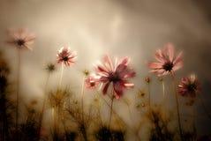 Wildflowerskarte Stockfotografie
