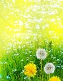 Wildflowerspaardebloemen Royalty-vrije Stock Foto