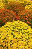 Wildflowertuin Royalty-vrije Stock Foto's
