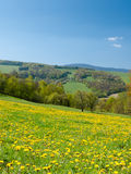 Wildflowerweide Royalty-vrije Stock Fotografie