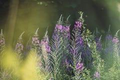 Wildflowerweide in de lente royalty-vrije stock foto's