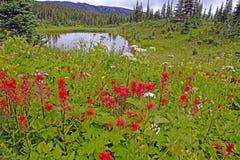 Wildflowerweide en moeras Stock Foto's