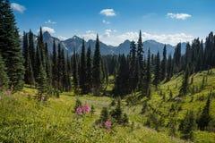 Wildflowerweiden en Tatoosh-Waaier Royalty-vrije Stock Foto
