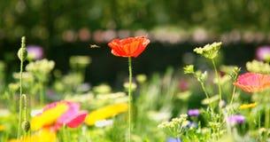 Wildflowerwiese Lizenzfreies Stockfoto