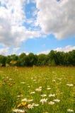 Wildflowerwiese stockfoto