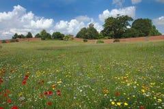 Wildflowerwiese, die ein Kaleidoskop der Farbe anzeigt lizenzfreie stockbilder