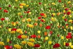Wildflowerwiese im Frühjahr Stockbild