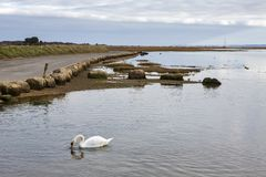 Wildfowl at Keyhaven marshes, Hampshire, UK royalty free stock images