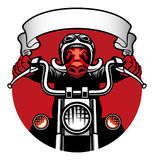 Wildhog biker Stock Photography