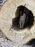 Wildkatze ausgewählt oben in seinem Versteck Lizenzfreie Stockbilder
