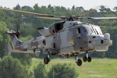 Wildkatze der Königlichen Marine Stockfotos