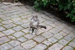 Wildkatze, die auf der Pflasterung sitzt Lizenzfreie Stockfotos