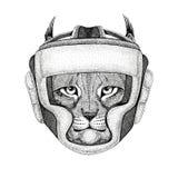 Wildkatze-Luchs-Bobcat Trot Wild-Boxer Verpacken-Tiersporteignung illutration Boxersturzhelm Verpacken wilden Tieres tragendes Stockfotos