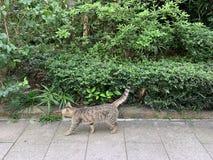 Wildkatzen in der Stadt lizenzfreie stockbilder
