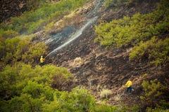 Wildlandbrandkämpar som besprutar vatten på träd Arkivbild