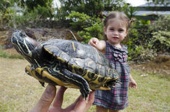Wildlif and Animals -Sea Turtle Stock Images
