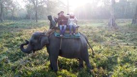 wildlife Περιοχή Foreat Φύση Τοπίο στοκ φωτογραφία με δικαίωμα ελεύθερης χρήσης
