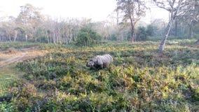 wildlife Περιοχή Foreat Φύση Τοπίο στοκ φωτογραφίες