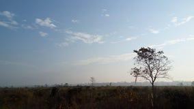 wildlife Περιοχή Foreat Φύση Τοπίο στοκ εικόνες
