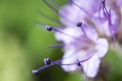 wildlife красивейший близкий цветок вверх macrocosm стоковые изображения
