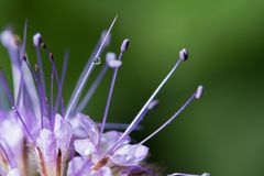 wildlife красивейший близкий цветок вверх macrocosm стоковое фото