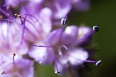 wildlife красивейший близкий цветок вверх macrocosm стоковое изображение rf