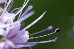 wildlife красивейший близкий цветок вверх macrocosm стоковые фото
