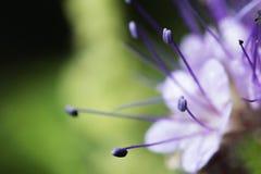 wildlife красивейший близкий цветок вверх macrocosm стоковая фотография rf