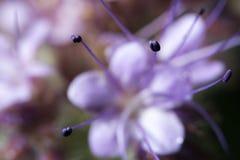 wildlife красивейший близкий цветок вверх macrocosm стоковые фотографии rf