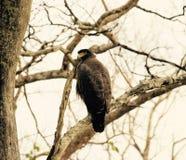 wildlife стоковое фото rf