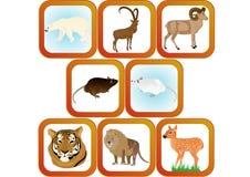 Wildlife Stock Image