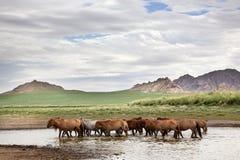 Free Wildlife Stock Photos - 28851033