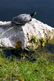 Wildlife Royalty Free Stock Photography