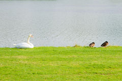 wildlife στοκ εικόνες με δικαίωμα ελεύθερης χρήσης