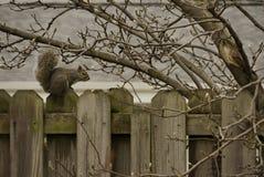 wildlife Стоковые Фото