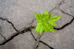 Wildlife. Small green sprout in the dry cracked soil Stock Photography