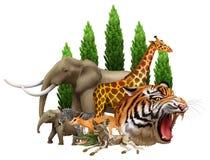 wildlife иллюстрация вектора