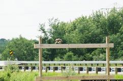 wildlife Stock Afbeeldingen