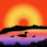 Wildlife. Three birds on twilight evening Stock Photo