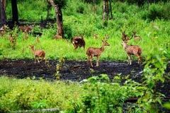 wildlife Imagens de Stock