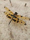 wildlife royalty-vrije stock fotografie