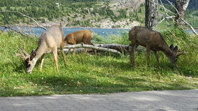 wildlife Immagine Stock Libera da Diritti